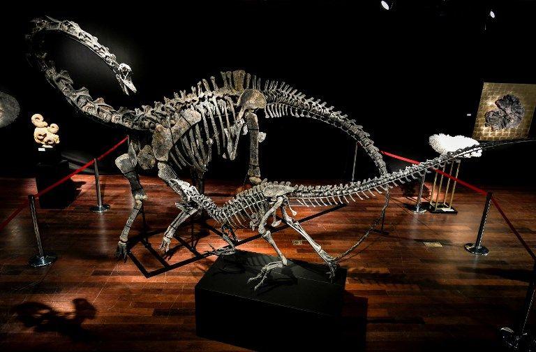 De nouveaux indices permettent de comprendre comment les plus gros des dinosaures sont devenus d'aussi gigantesques créatures