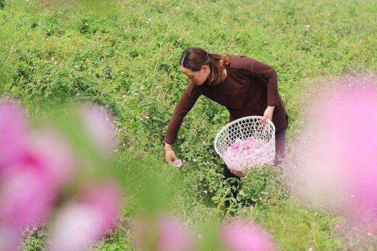Une paysanne en Chine.