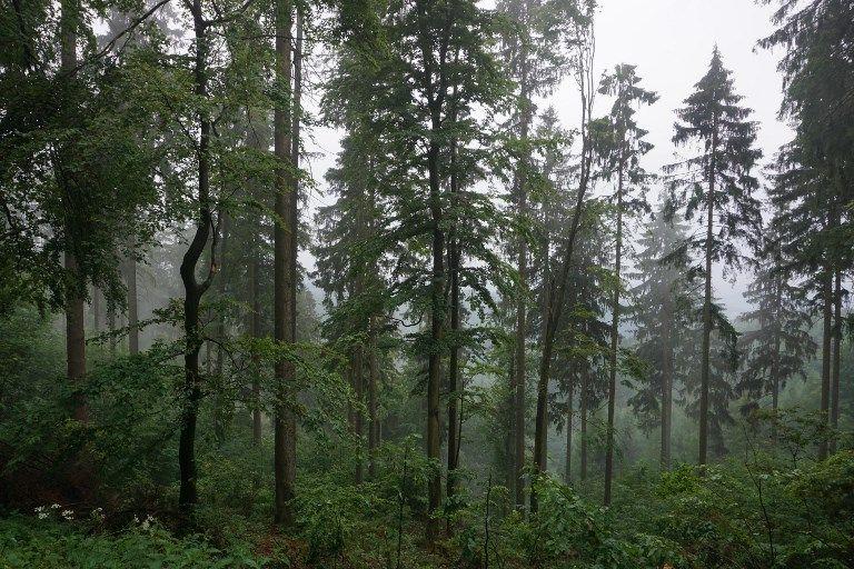 Le nombre d'arbre sur la planète augmente, leur variété diminue. Comment l'espèce humaine façonne sa propre biodiversité