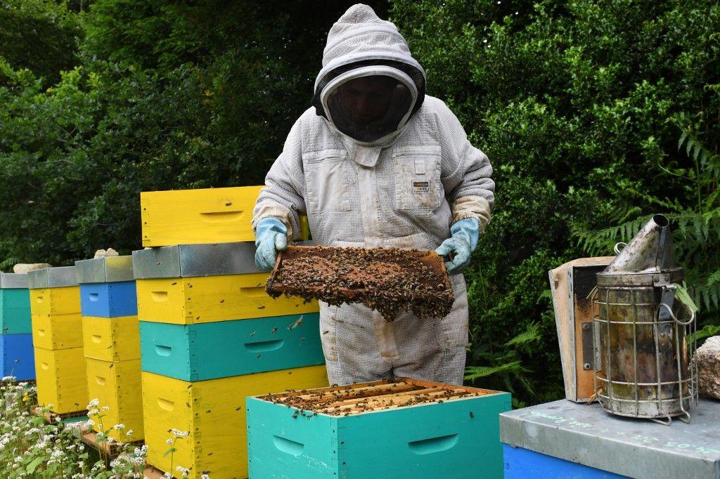 En pénurie mondiale, le miel s'ouvre à tous les trafics