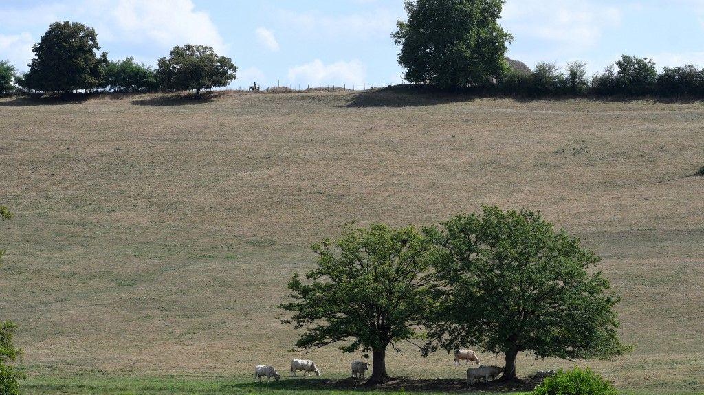 Les prairies sont, elles aussi, des puits à CO2.
