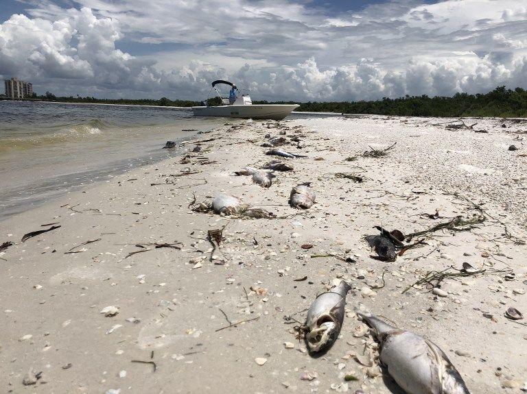Une marée rouge catastrophique frappe la Floride