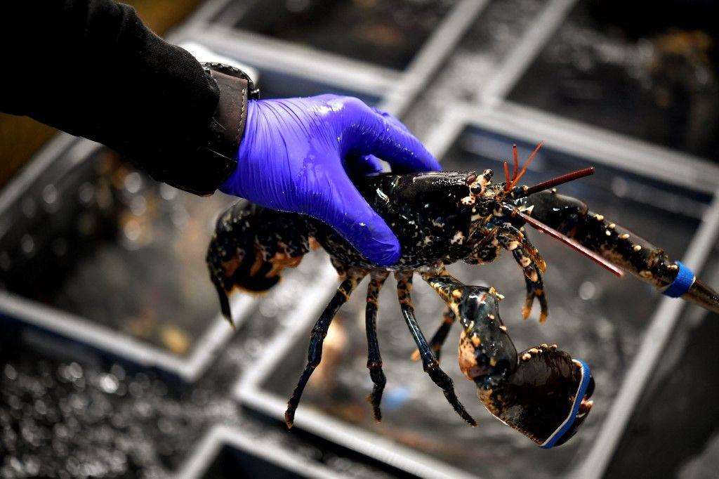 Qu'est-ce qui sépare un homard d'une crevette ? L'appartenance sociale de ceux qui les mangent !