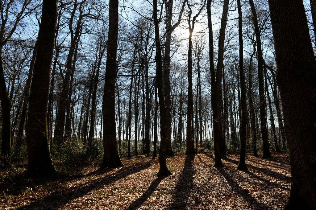 Le soleil brille à travers des chênes, dont certains ont plus de 300 ans, à la « haute forêt du Clos », dans la Sarthe, dans le nord-ouest de la France, le 14 février 2019.