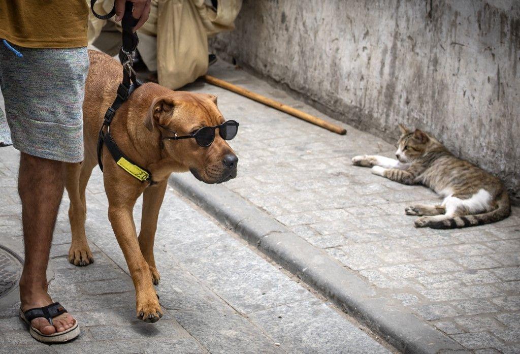 Un chien tenu en laisse regarde un chat dans une rue de la capitale marocaine Rabat, le 25 juin 2020.