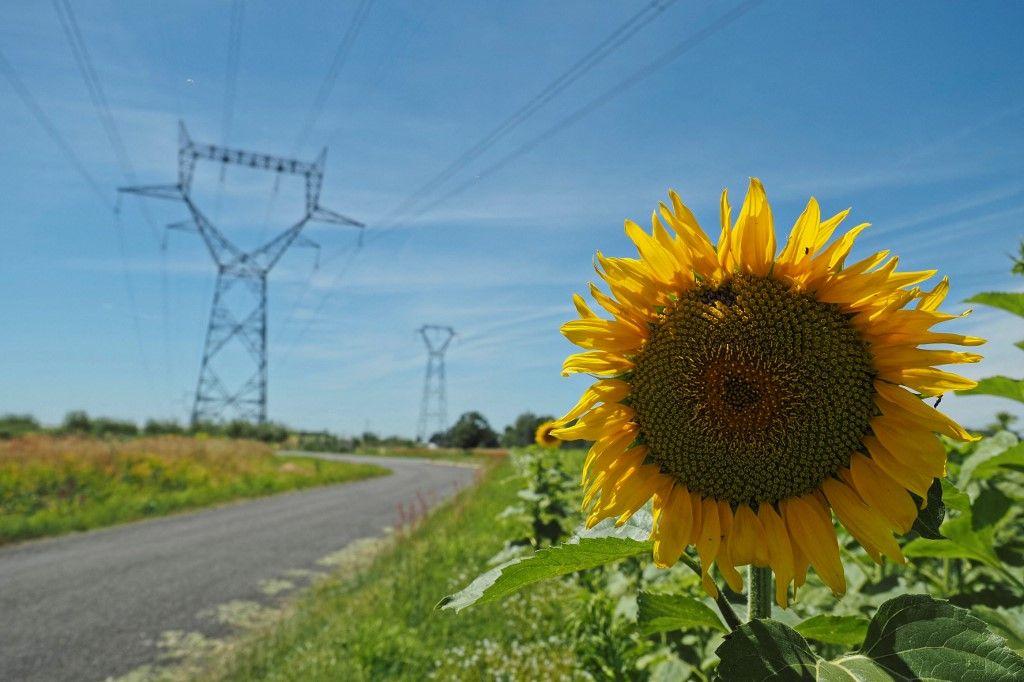 Un tournesol est photographié près de la centrale nucléaire de Chinon à Avoine, dans le centre de la France, le 8 juillet 2020.