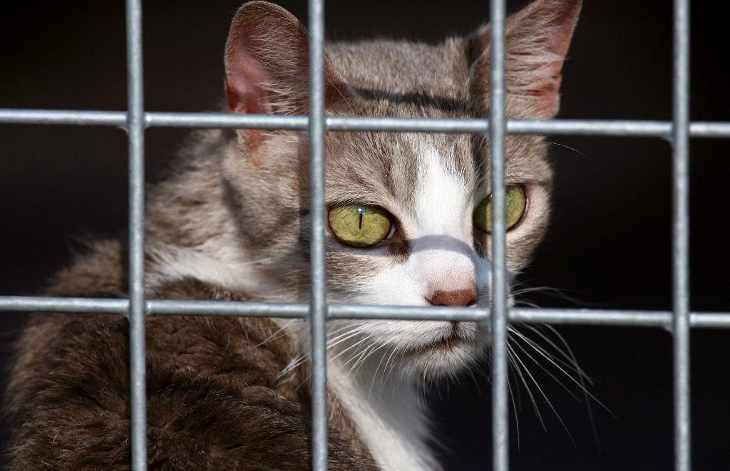 Covid-19 : il va être maintenant possible de se déplacer pour adopter un animal