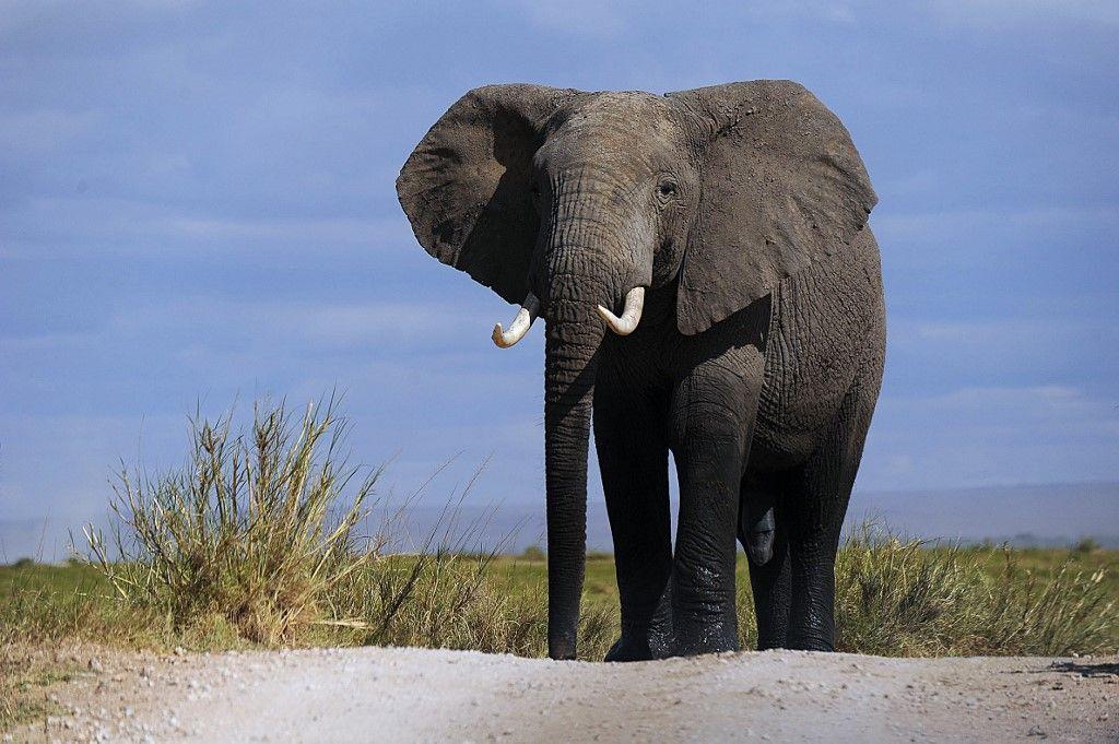 Tanzanie : la chasse aux trophées va être limitée