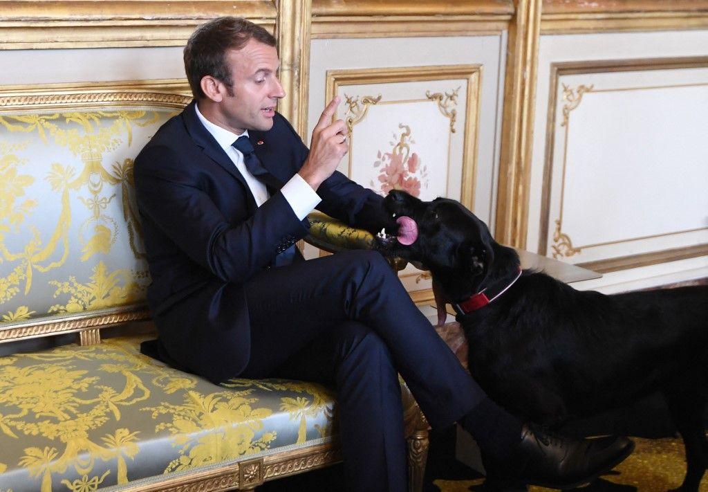 Le président Emmanuel Macron et son chien Nemo avant une rencontre avec le ministre allemand des Affaires étrangères à l'Elysée, le 30 août 2017.