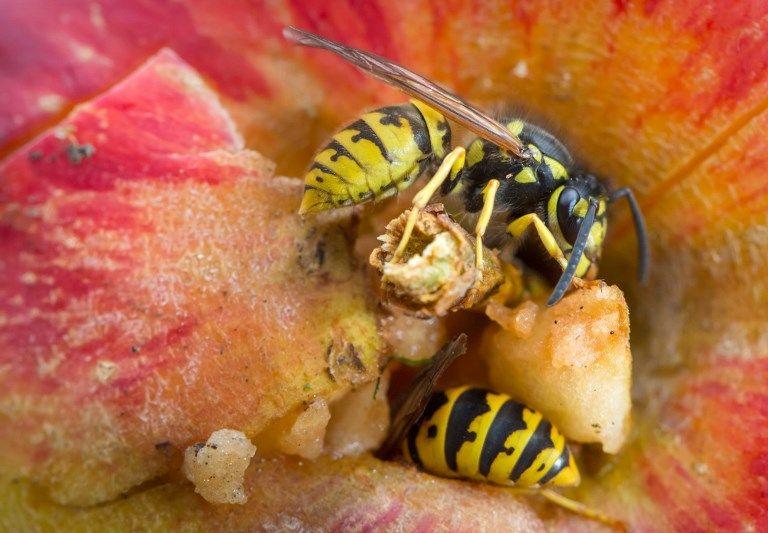 L'ONU veut que nous mangions plus d'insectes.