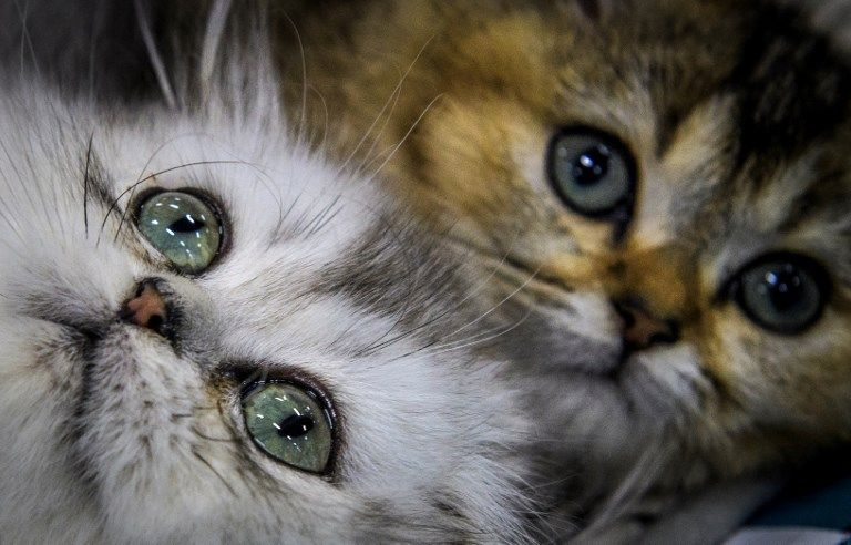 Les refuges animaliers submergés de chats et chiens abandonnés