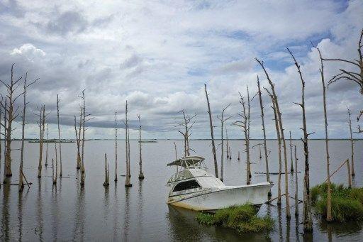 Des arbres submergés par l'eau salée en Lousiane (Etats-Unis).