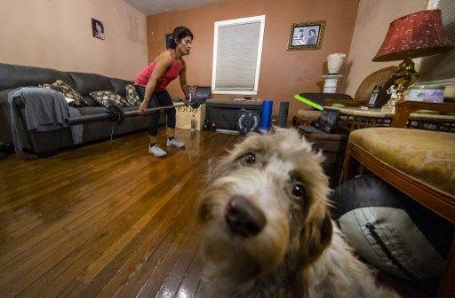 La crise sanitaire a aussi entraîné l'essor du sport à la maison, au grand étonnement de nos animaux.
