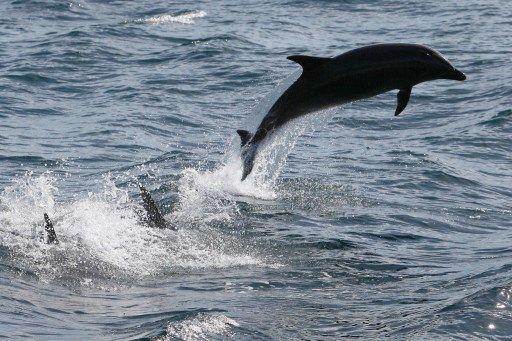 Le Canada décide d'interdire la captivité et l'élevage des dauphins et des baleines