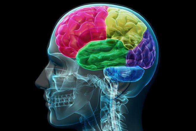 Le cerveau : ce grand régulateur de la douleur