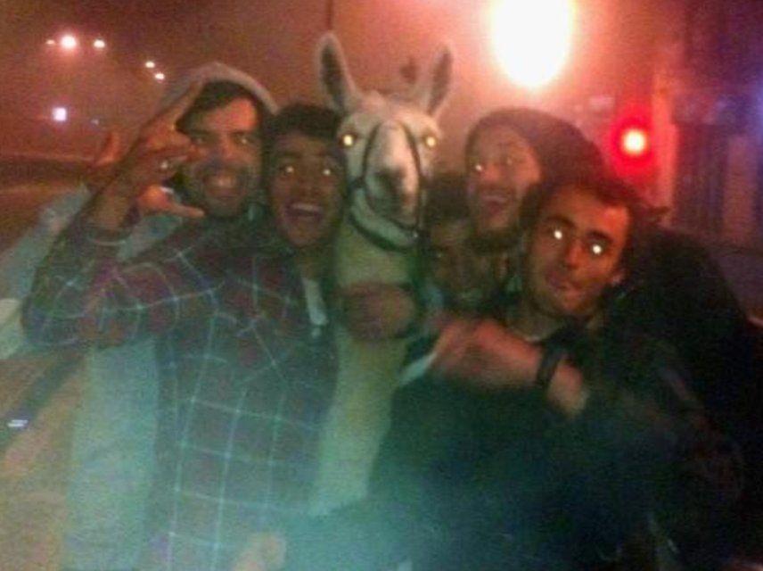 """Serge le lama, alias """"Kusco"""", et ses nouveaux amis."""
