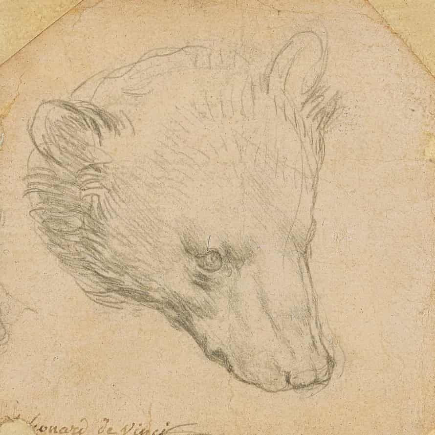 La tête d'ours de Léonard de Vinci.