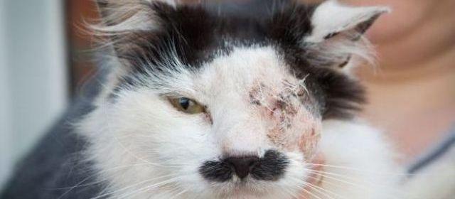 Un chat torturé parce qu'il ressemble à Hitler