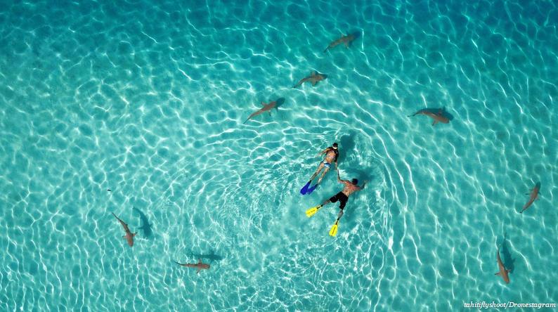 Non, notre phobie des requins ne date pas de la sortie des Dents de la mer en 1975 mais d'il y a 100 ans exactement, et voici pourquoi