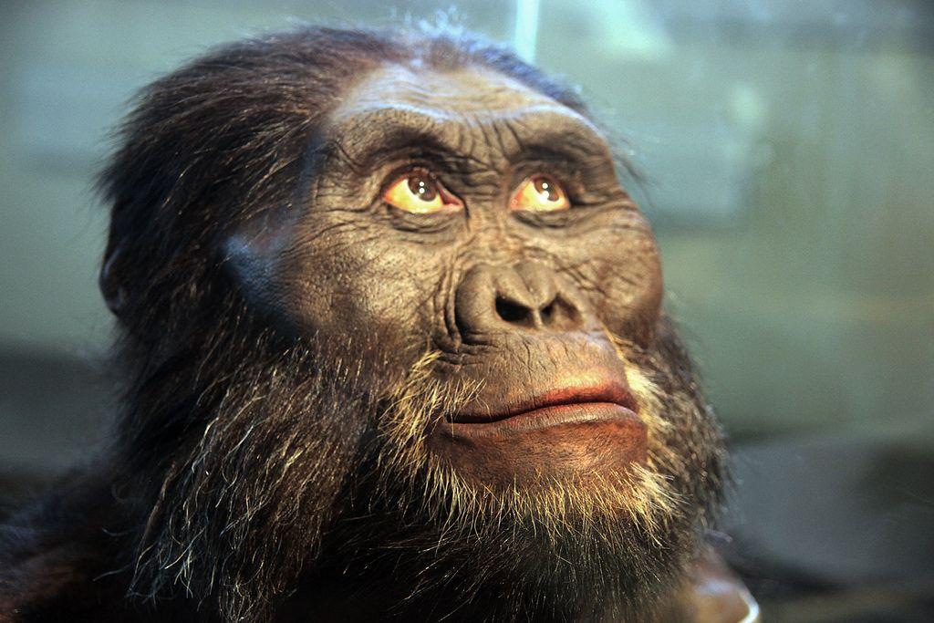 Les scientifiques annoncent la découverte d'une nouvelle espèce d'australopithèque