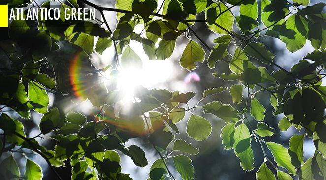 Une nouvelle étude montre qu'une reforestation massive pourrait ralentir le dérèglement climatique (à condition de ne pas se tromper d'arbre)