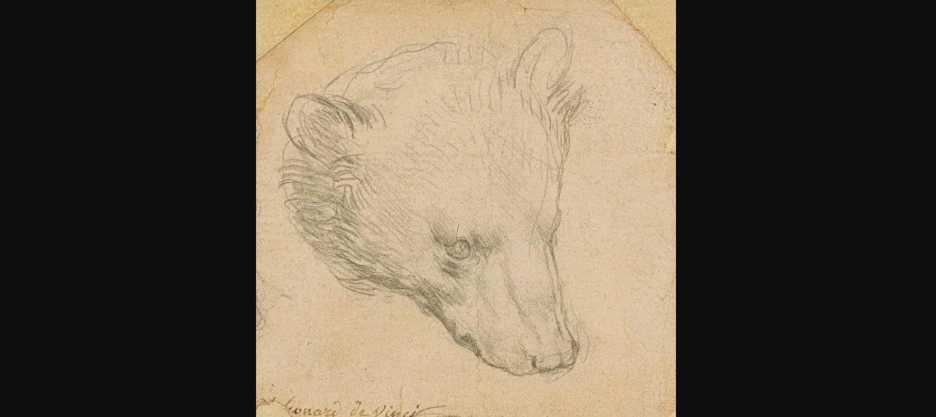 Cette tête d'ours a été dessinée par Léonard de Vinci.