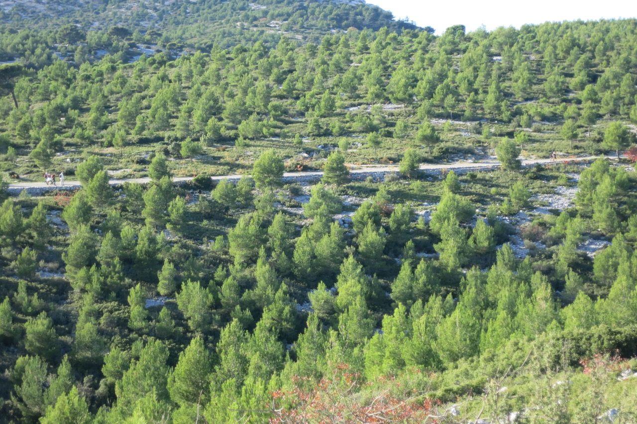 En deux siècles, les forêts ont doublé en France et voici pourquoi