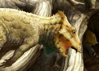 L'Aquilops americanus avait un bec était crochu et des joues protubérantes