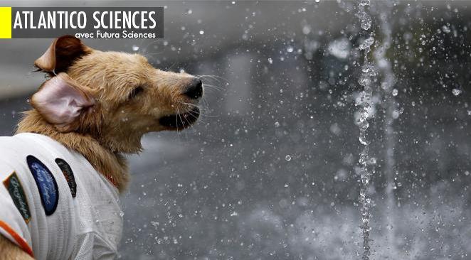 Des chercheurs ont réalisé un prototype d'appareil qui permet à un chien d'envoyer un message aux Google Glass de son maître.