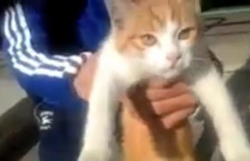 """Marseille : le chat torturé retrouvé vivant mais """"mal enpoint"""""""