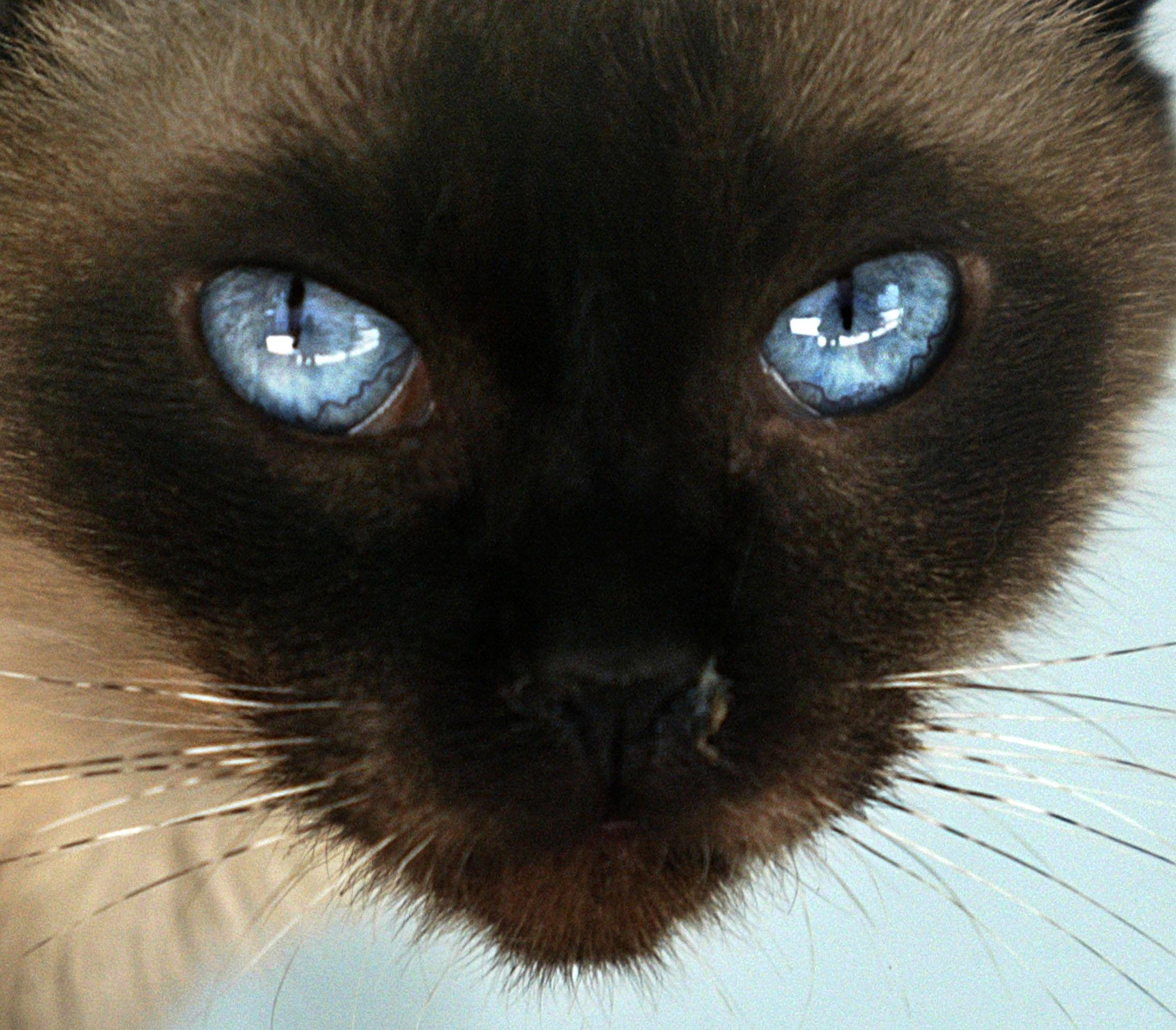 Nouvelle-Zélande : la double vie de Cleo/Ming, le chat aux deux foyers