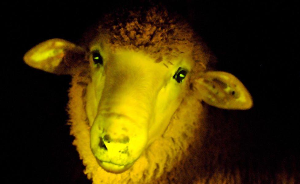 """Les gens """"branchés"""" finissent presque systématiquement par se ressembler, tels des moutons."""