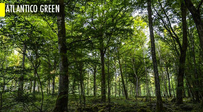 Pourquoi les forêts font leur grand retour en Europe