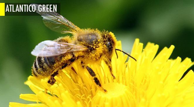 Fin du monde ? La très inquiétante reprise de la disparition des abeilles pollinisatrices
