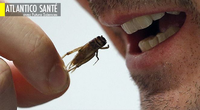 L'entomophagie, le fait de se nourrir d'insectes, est courant dans certains pays.