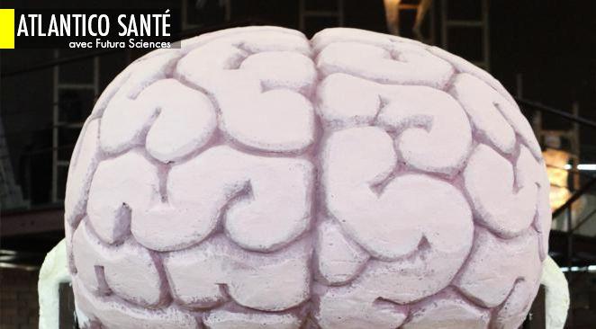 Intelligence : une des origines génétiques identifiée ; Leucémie : une piste pour contrer les tumeurs
