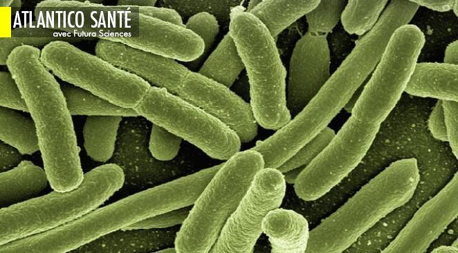 Des bactéries qui résistent aux antibiotiques... en les mangeant ; Transférer la mémoire d'un individu à un autre : c'est possible !
