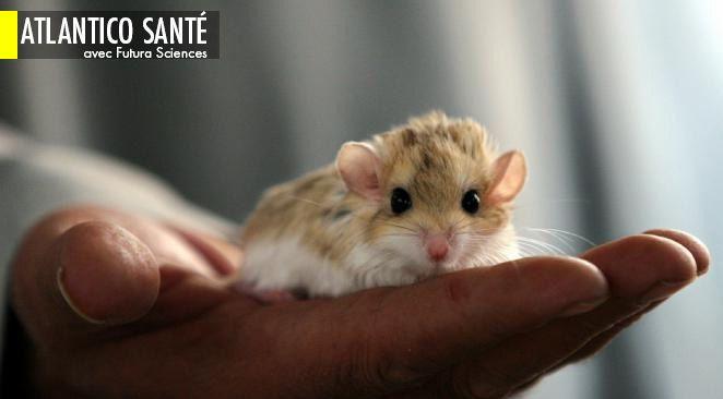 Ils éliminent le virus du Sida chez des souris ; Trois conseils pour en finir avec la migraine