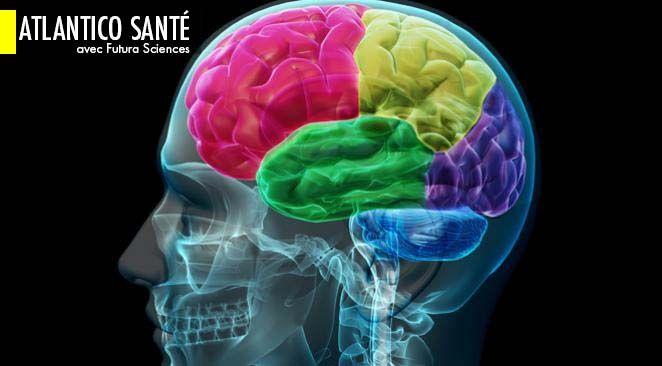 Les connexions fonctionnelles entre les régions du cerveau évoluent au cours de la vie.