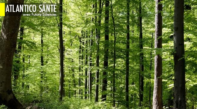 """Sylvothérapie : 4 bonnes raisons d'essayer un """"bain de forêt"""" ; Douleur chronique : une cause moléculaire identifiée"""