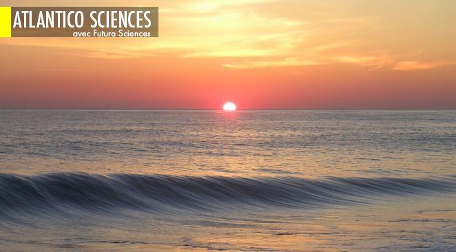 Des océans très chauds auraient accéléré l'évolution de la vie ; Durus, le robot qui marche comme un humain