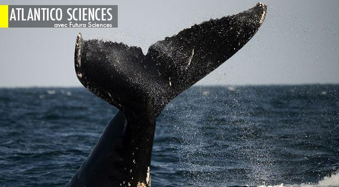 Les ancêtres des baleines naissaient sur la terre ferme ! ; Hubble : une galaxie relique découverte près de chez nous