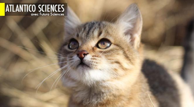 En Chine, le chat aurait été domestiqué il y a plus de 5.000 ans ; hausse du niveau des océans : pourquoi le modèle serait à revoir