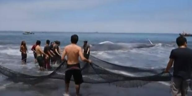 Plus de 80 baleines retrouvées échouées sur une plage du sud de l'Inde