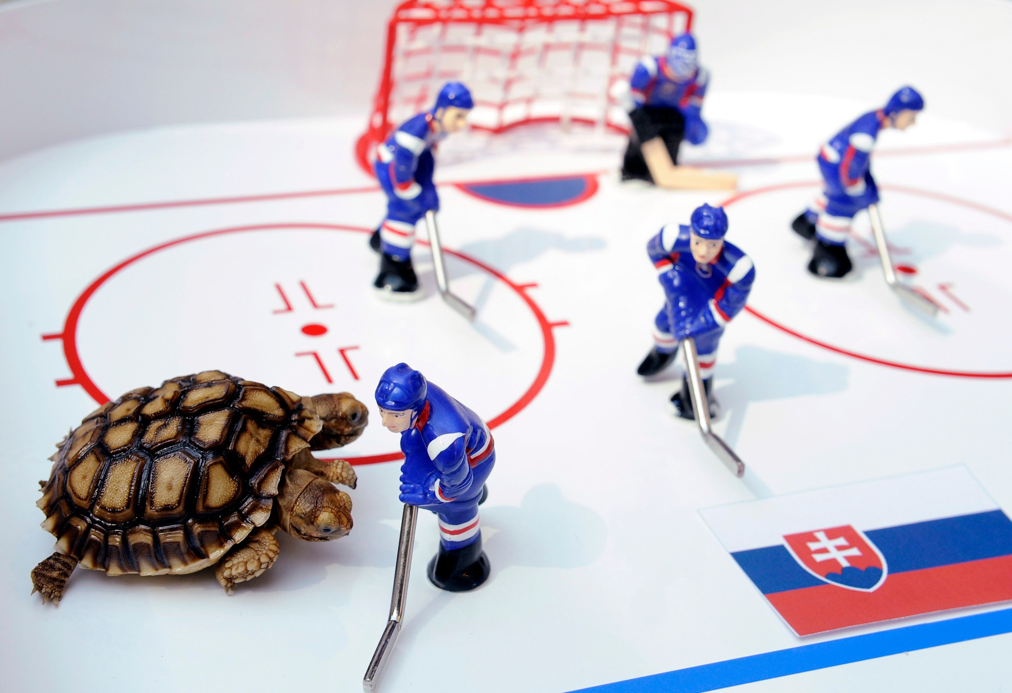 Allemagne : il greffe une roue de Lego sur une tortue