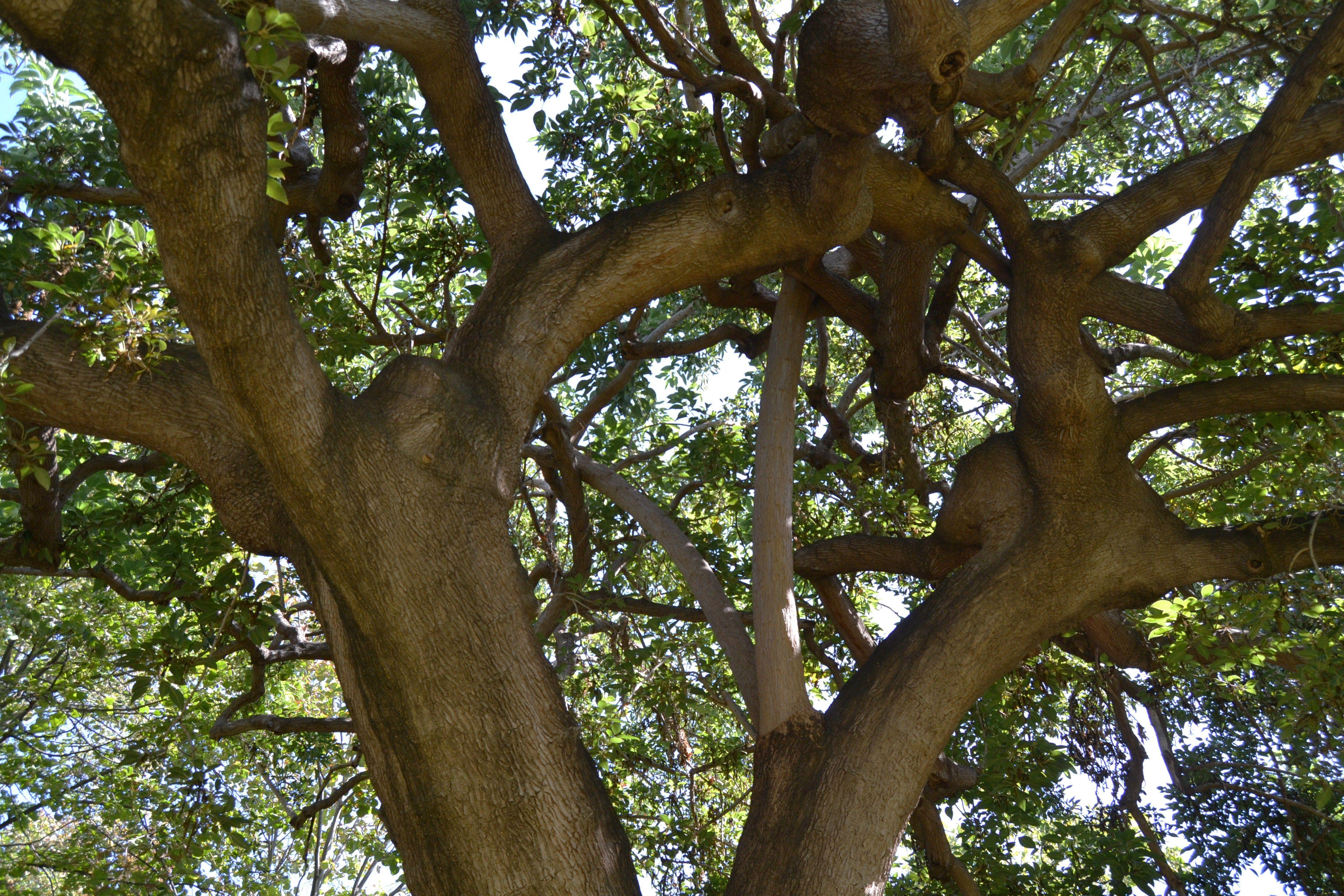 #FillonGate :  l'arbre qui cache la forêt de l'hypocrisie générale des français et de leurs élus à l'égard du financement de la vie politique