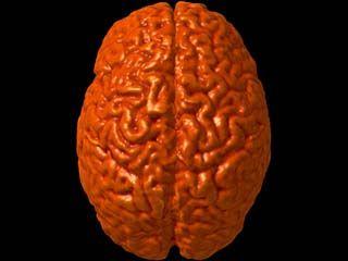 La cerveau humain devient plus efficace avec l'âge.