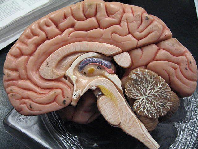 Des chercheurs français découvrent un outil capable de suivre l'évolution cérébrale des patients dans le coma