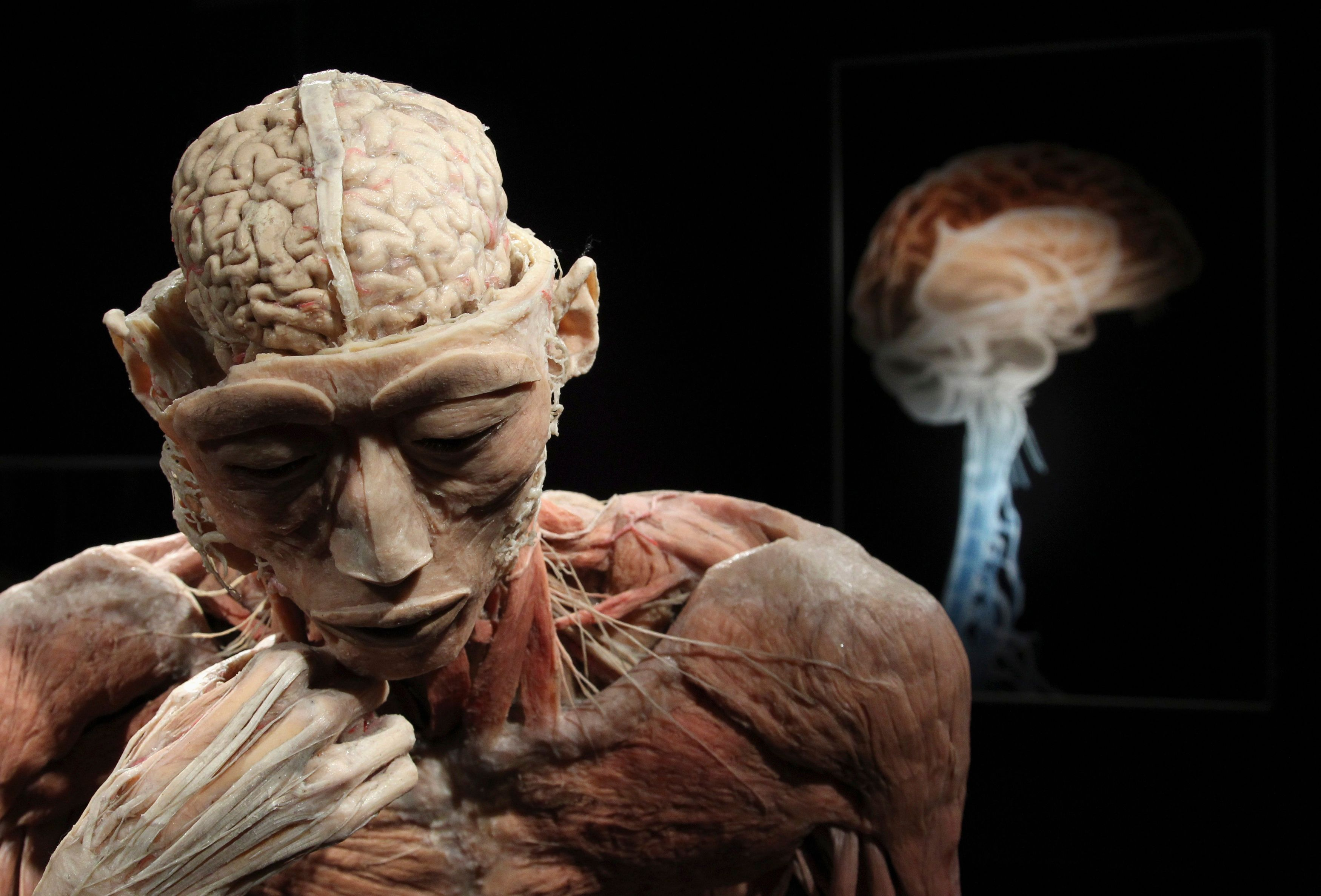Aussi complexe qu'il soit, il ne faut pas ramener au cerveau l'ensemble de nos comportements.