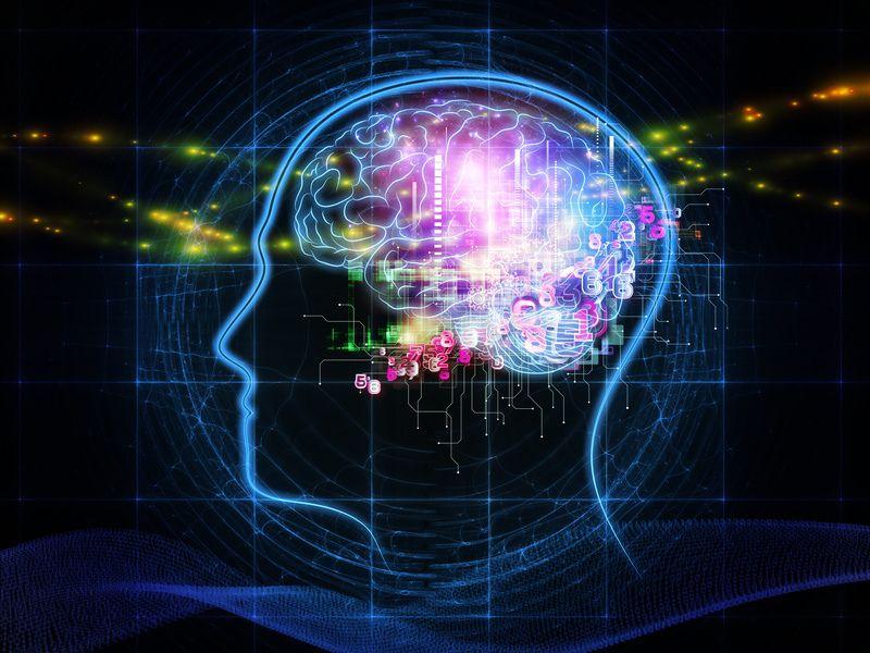 La nouvelle cartographie du cerveau humain compte 97 nouvelles zones jusqu'alors inconnues des scientifiques
